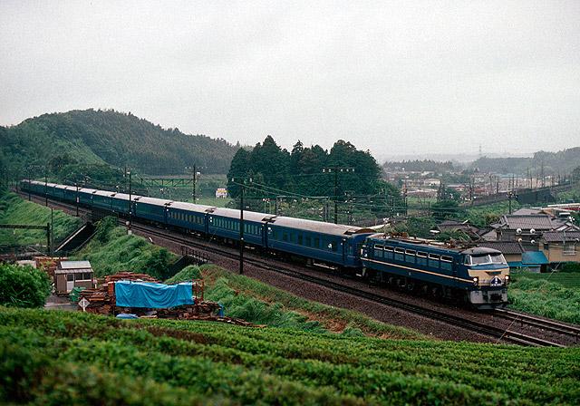 Shizuokafuji